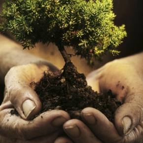 Ik ga op reis en ik neem mee… eenboom!