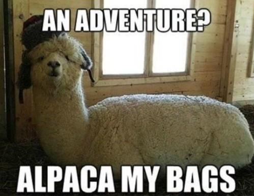 alpaca-2