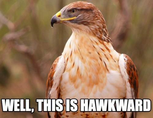 HAWK-PUN-2