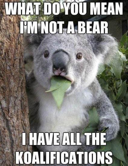 koalafications-2